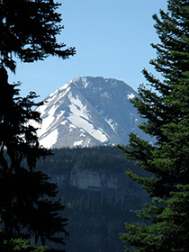 snowy mountain framed by evergreens